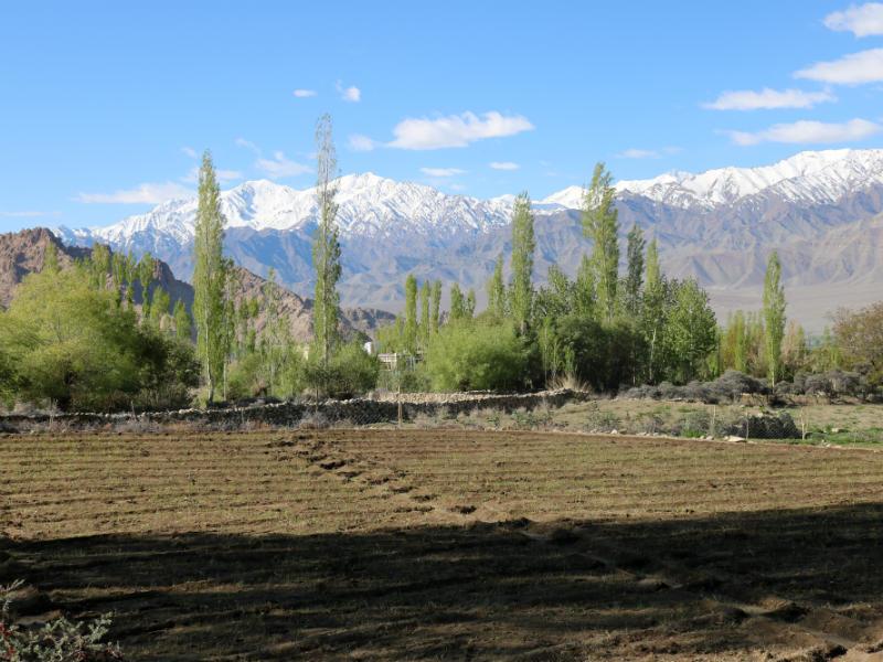 Ladakh Sarai: um hotel ao pé da Cordilheira do Himalaia